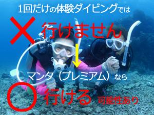 石垣島のマンタポイントは体験ダイビングで行ける?