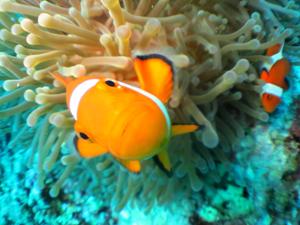 石垣島体験ダイビングで会える生物