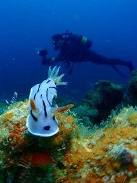 umiushi&diver01-400.jpg