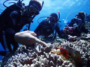 PADIアドバンス講習魚の見分け方の海洋実習の風景