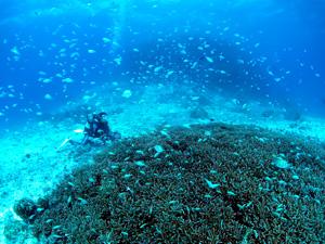 美しい海中でスズメダイの大群に囲まれるダイバー