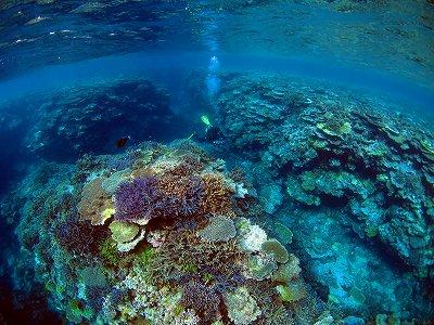 透明度が良くカラフルなサンゴ礁の海を泳ぐダイバー