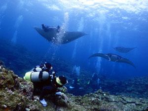 石垣島のマンタ3匹とダイバー