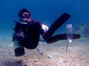 PADIアドバンス講習ピーク・パフォーマンス・ボイヤンシー(PPB)の海洋実習の風景