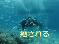 スズメダイの群れに囲まれる体験ダイバー